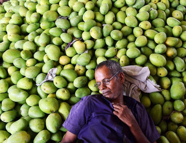 The EU ban on mango exports has hit farmers