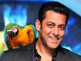 Salman Khan not to host Bigg Boss Season 8?