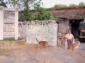 Bihar government begins renovation of George Orwell's house in Motihari