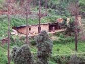 Green warrior wins war to save forest land