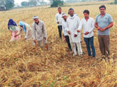 Every UP neta is taking a pro-farmer stance