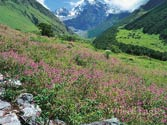 Flowery carpet awaits tourists: Valley of flowers to reopen from June 1