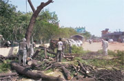 Capital greens reduced to ashes, trees cut and sent to crematoriums