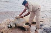 Gujarat flash floods kill eight lions, other animals