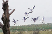 States picking development over protection of wildlife