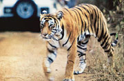 National Board for Wildlife clears 18 projects in some crucial wildlife zones