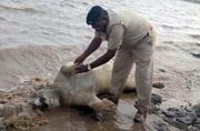 Gujarat flash floods kill 10 lions, 90 spotted deer