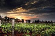 Why Karnataka's vineyards are the next big thing