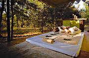 Balance the wilderness of Kanha's jungles with the luxury of the Singinawa Jungle Lodge.
