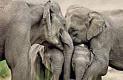With less than 30,000 elephants left in our forests, these raw images, captured through the lens of wild life photographer Rajesh Bedi, are a reminder that they need saving