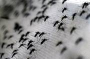 China sets up World's largest mosquito factory