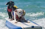 Pet Scan: Choose a pet that suits your lifestyle best