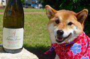 Five fun wine experts worth following on Instagram