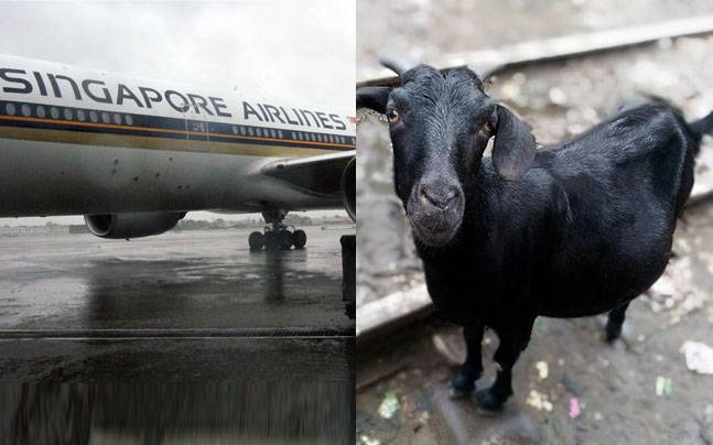 Goat and Plane