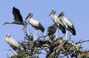 Asola eco-sensitive zone in Haryana to miss major spots