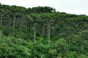African countries aim at restoring 100 million hectares of forests