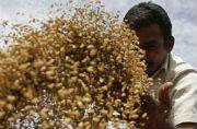 Goa Government launches National Food Security Act, 2013: Things you should know
