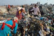 Uttar Pradesh government bans polythene bags in the state: Harmful effects of plastic