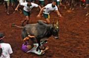 Jallikattu row: Jayalalithaa writes to PM, wants ordinance in favour of bull taming sport