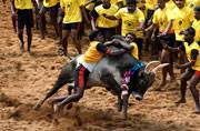 Supreme Court stay on Jallikattu to continue