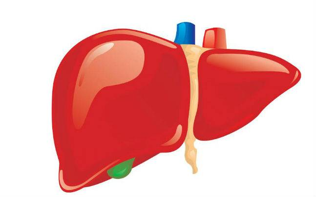 Scientists in China develop new bio-artificial liver based on human ...