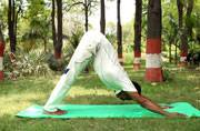 Head-down yoga positions can be fatal for glaucoma patients: Study