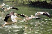 Flip-flop Delhi weather keeps migratory birds away