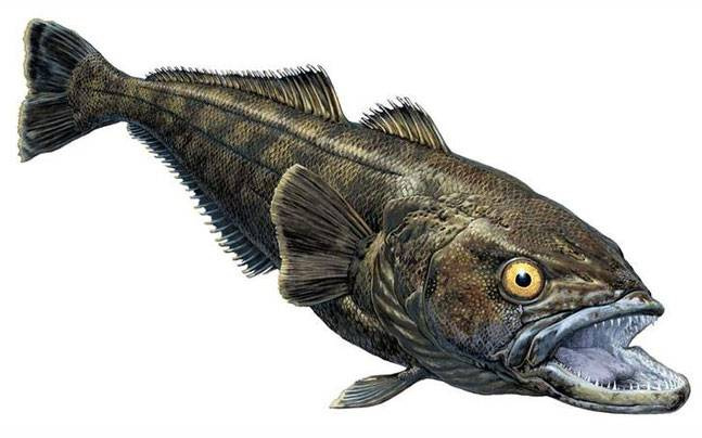 Researchers discover new fossil fish species