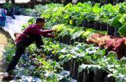 India's first fully organic state Sikkim to now have institute on Organic Farming