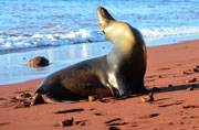 Galapagos Islands: A remote place on the Pacific that inspired Darwin