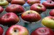 Apples: These 5 big reasons make this superfruit worthy of the 'keep the doctor away' adage