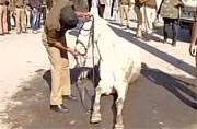 Uttarakhand: Police horse loses leg after attack by BJP MLA Ganesh Joshi