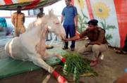 Chop off my leg if proven guilty: BJP MLA on horse attack