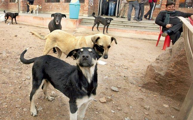 Stray dogs to be sterilised