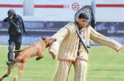 Pathankot's canine hero Rocket to receive gallantry award