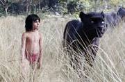 The Jungle Book box office collection: The fantasy film rakes in Rs 74 crore in its opening week