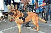 Military dog Lucca receives medal for service: List of some famous animals