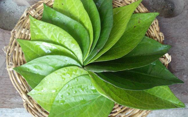 5 health benefits of chewing paan or betel leaves nobody told you