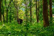 6 amazing jungle camps in India you must visit at least once