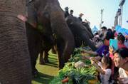 This is how Bangkok revelled in the annual King's Cup Elephant Polo Tournament