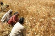 Nafed revival: Centre bailout divides ailing farmers' body