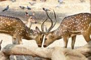 16 spotted deer die at Delhi zoo, authorities concerned
