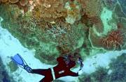 Bleaching kills 35 per cent of coral in Great Barrier Reef: Report