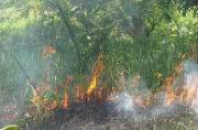 Sundarban under fire: Massive fires that burned down cities