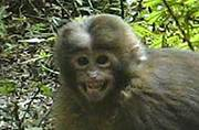 New mammal species White Cheeked Macaque discovered in Arunachal Pradesh: Seven newly discovered species around the world