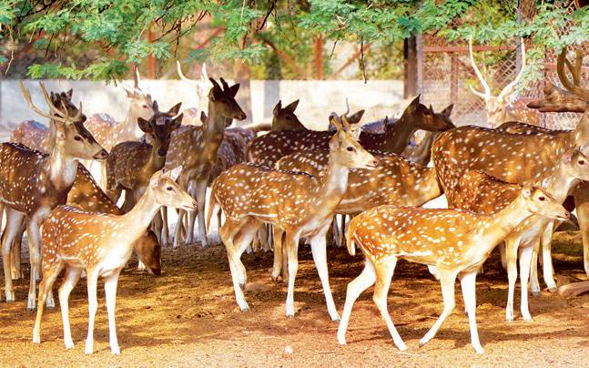 Around 16 deer had died in the zoo after they contracted rabies.