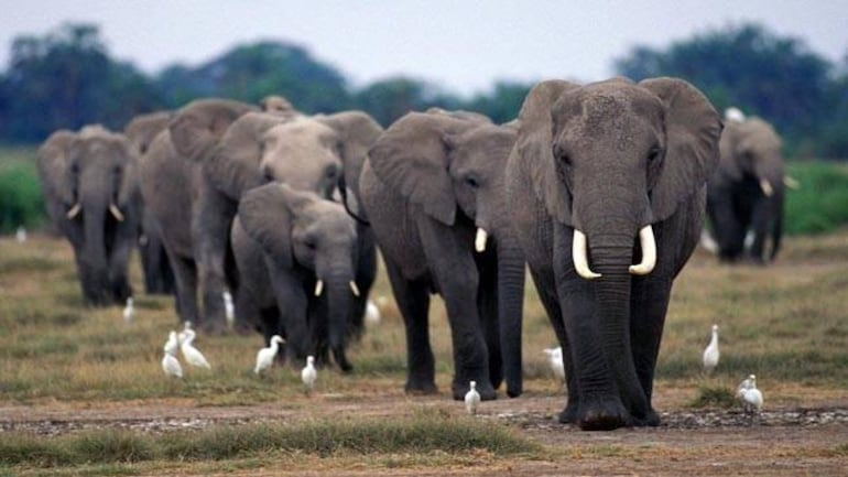 Top 10 smartest animals - Education Today News
