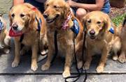 These dogs have been helping Orlando victims express their grief