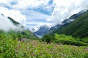 3 years after the Uttarakhand disaster, Valley of Flowers re-opens for tourists