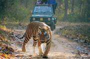 Want to go tiger spotting? Get on board Tiger Express, the brand new train from Indian Railways